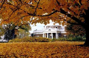 fall_maple